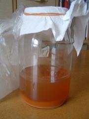 柿酢1号_20091229